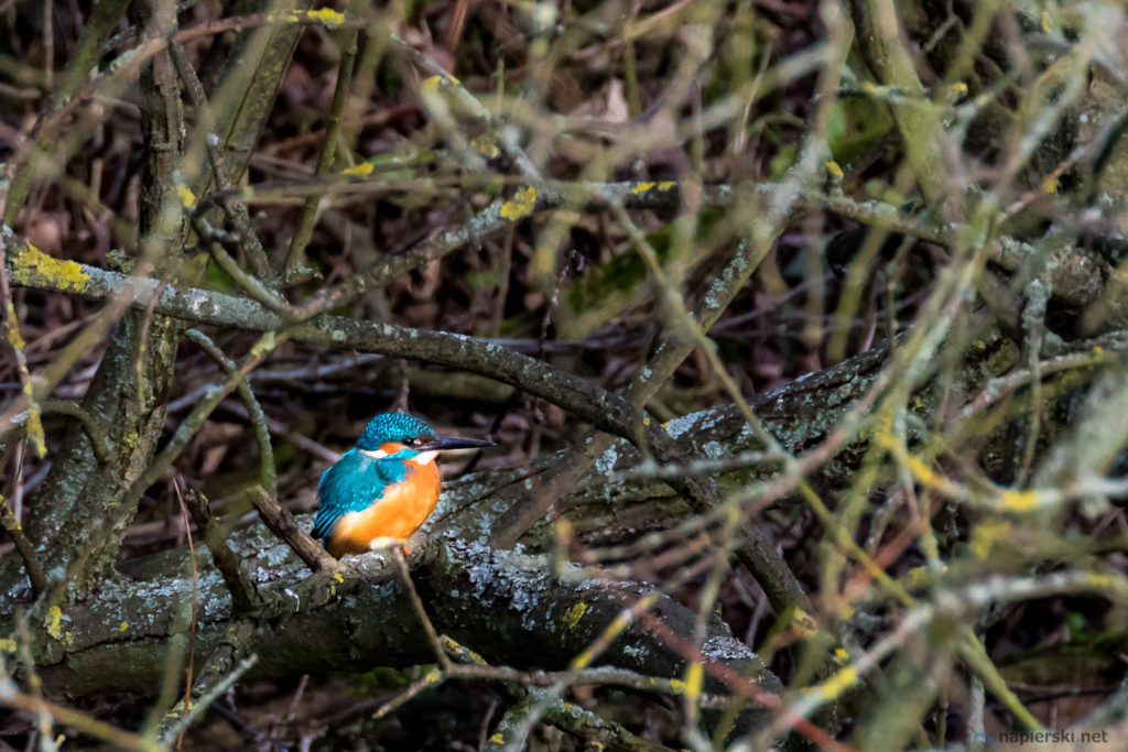 January 2017, RSPB Rye Meads, Hertfordshire, UK