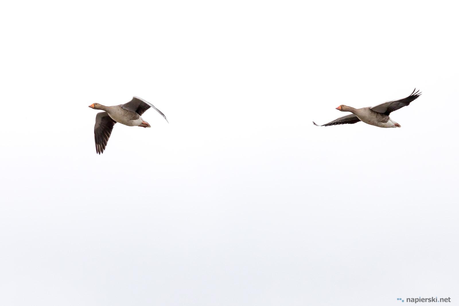 March 2017, Rainham Marshes, Purfleet, UK