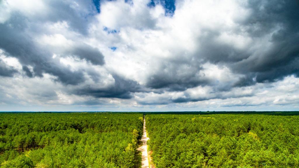 August 2017, Mazowiecki Landscape Park, Otwock, Poland